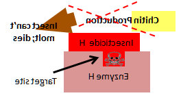diagram showing insecticide binding with target site
